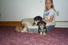 JJ_and_Havanese_female_pups__2_800x600